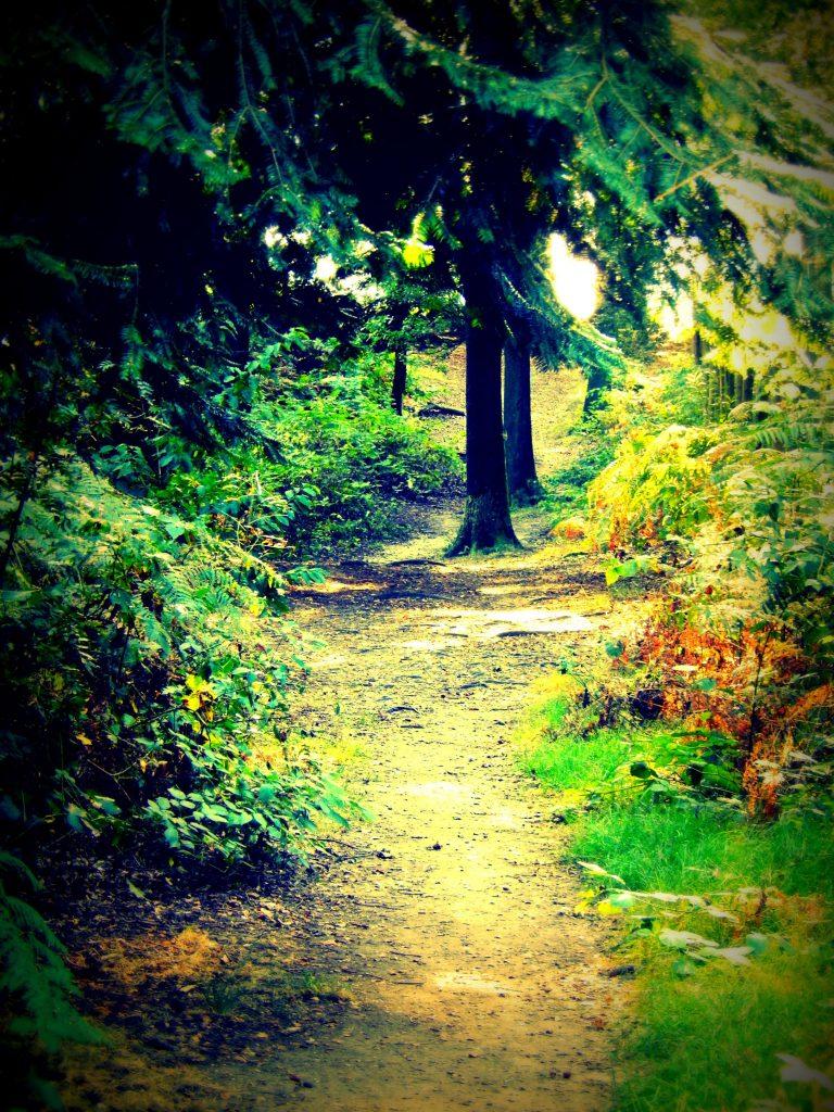 Literaire wandeling Felicita Vos